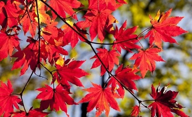 Winter Öffnungszeiten / ab November ist Dienstag geschlossen